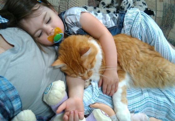 Buddy the Kitty and His Younger Human Sister Growing Up Together
