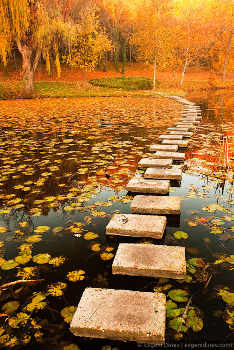 bluepueblo:  Autumn Walkway, Poland  photo lookinout