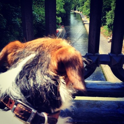 Watching the boats on the canal. #london #dogoftheday #jackrussell #walkies #ilovemyjackrussell #dog #regentspark (Taken with Instagram at Regent's Park North Gate)