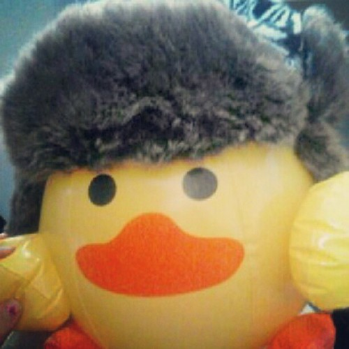 Nigel the hipster duck ~ (Taken with Instagram)