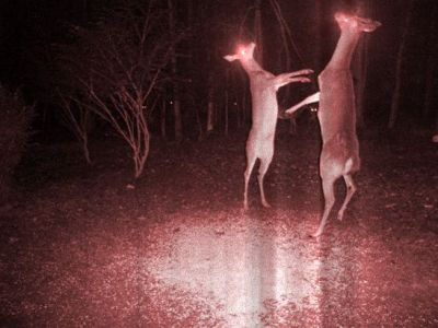 animalstalkinginallcaps:  MUST FEEEEEED. NEED BLOOD. AND ANTLERRRRRRRRRS.  GRRRRRRR. ANTLERRRRR- HOLY SHIT, STEPHANIE? ASHLEY? I HAVEN'T SEEN YOU SINCE FRESHMAN YEAR! DIDN'T YOU MOVE OUT OF STATE? YEAH, I JUST MOVED BACK THIS AUGUST. AND YOU GOT POSSESSED BY A DEMONIC ENTITY THAT FILLS YOU WITH AN INEXHAUSTIBLE CRAVING FOR THE FLESH AND MARROW OF YOUR OWN KIND TOO? YEAH, BASICALLY RIGHT AFTER I MOVED BACK. SEPTEMBER, MAYBE? MID-SEPTEMBER? THAT'S CRAZY! WHAT A SMALL WORLD! I KNOW. WHAT ARE THE ODDS? IT'S REALLY GOOD RUNNING INTO YOU. WE SHOULD DO SOMETHING SOMETIME. DEFINITELY.
