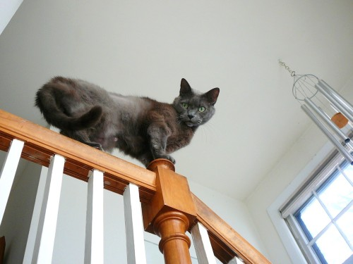 get down from there cat. handrails are for hands, not cats.