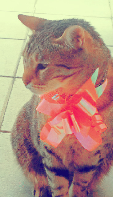 my adorable little cat with a pink ribbon ♥♥♥