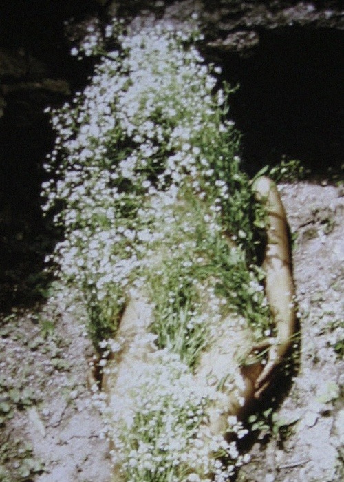 billowy:   Flowers on Body, 1970 by Ana Mendieta