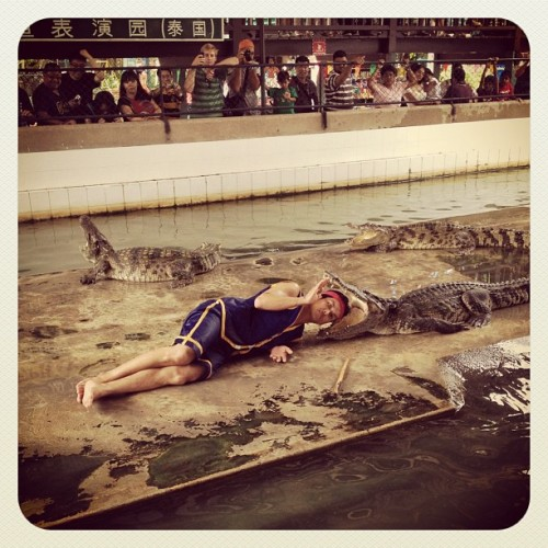 Bravery or Stupidity? Either way it's entertaining. #Thailand #CrocodileShow