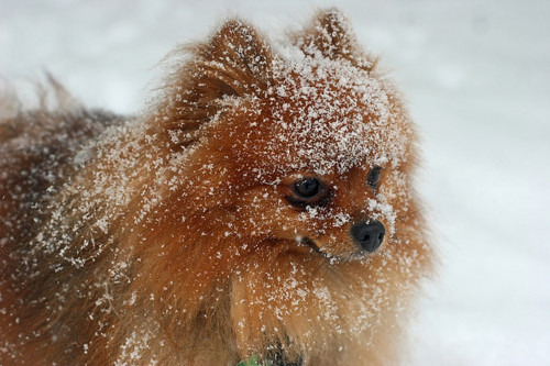 definitely what foxy looks like whenst in snow ;)