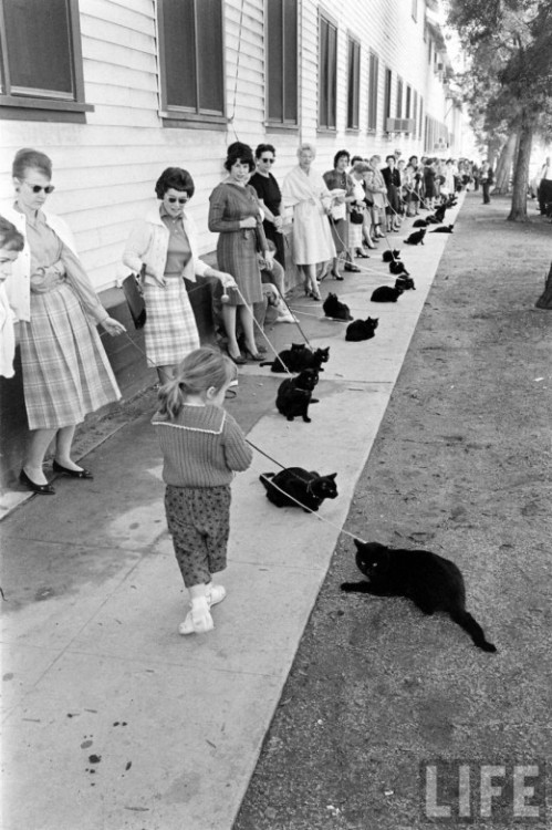 iconoclassic:  (via Black Cat Auditions In Hollywood, 1961 | Retronaut)