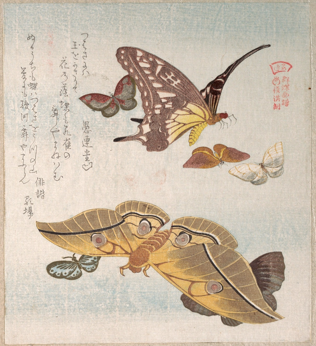 heracliteanfire:  Various Moths and Butterflies. Kubo Shunman, C19th (via The Metropolitan Museum of Art)
