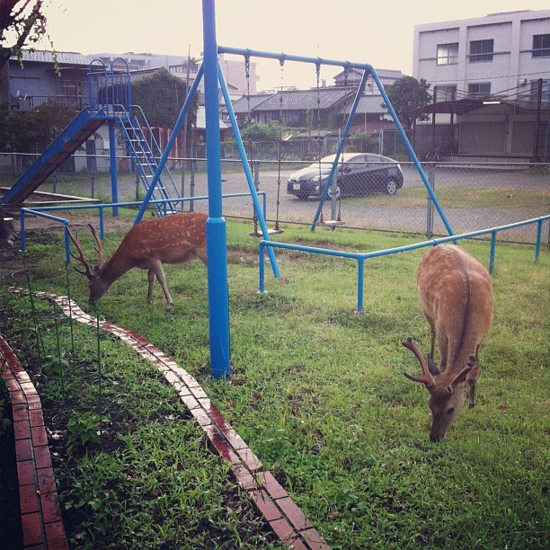 Meanwhile, in Nara… (Taken with Instagram)