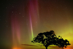 Tree with Aurora by Warren Justice on Flickr.