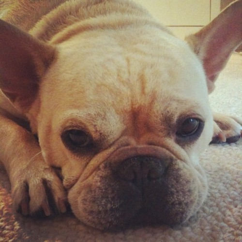 thefluffingtonpost:  PHOTO OP: Lazy Bones Via Batpig and Me.