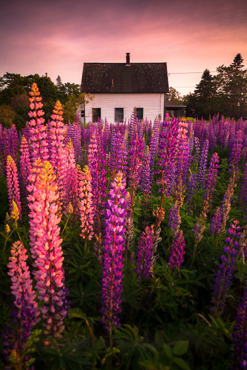 Lupine Cottage | Tremont, Maine, USA©Nate Parker Photography