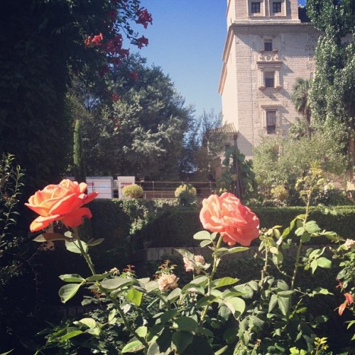 Beautiful flowers near the Alhambra.  (Taken with Instagram)