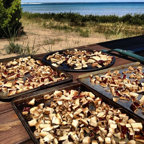 Sun drying my foraged Reishi mushrooms on the shores of Lake Michigan at Seul Choix. #puremichigan #foraging  (Taken with Instagram)