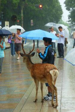 A boy sharing an umbrella with a deer