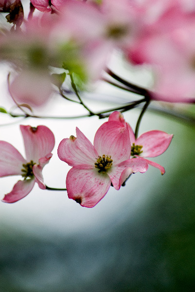 Spring Blossom 3by ~Art-Photo