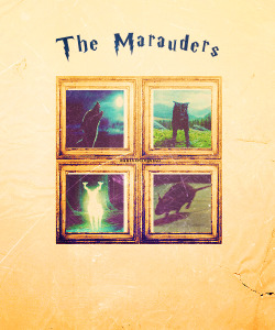 Moony, Padfoot, Prongs and Wormtail ➟ The Marauders.