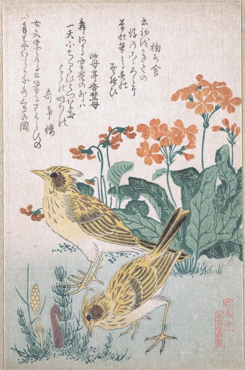 heracliteanfire:  Skylarks and Primroses. Kubo Shunman, C19th (via The Metropolitan Museum of Art)