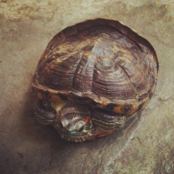 #tortoise #shell #reptile Day out with the house pet.  (Taken with Instagram)