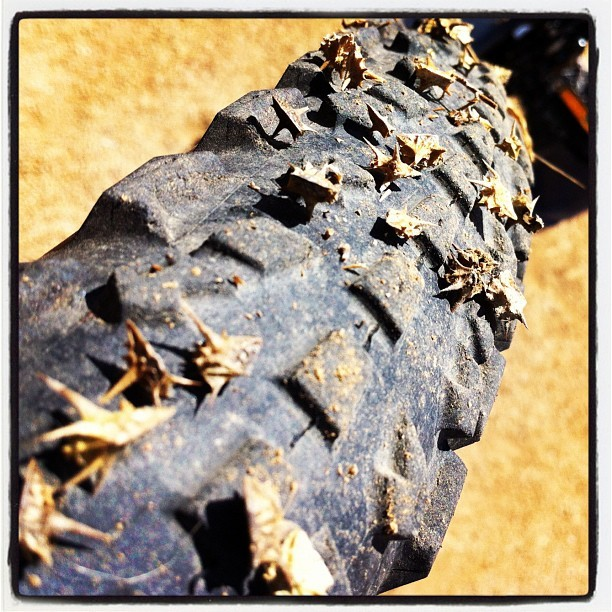 Both wheels covered in #goathead #thorns mental note: its ok to stay on the beaten path sometimes! #uggh #gameover #double #flat #mtb #cycling #bicycle #igerscycling #mountainbike #fail  (Taken with Instagram)