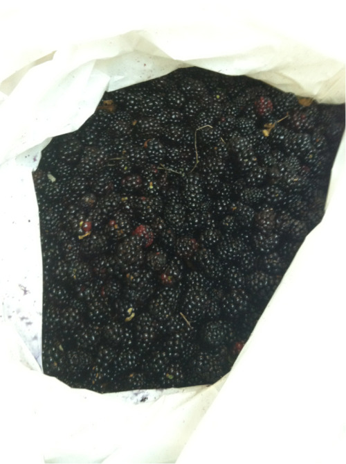Blackberries!!