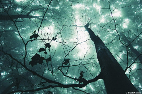 What a world we've become //  photography of surreal Romanian forest by brothers Andrei and Sergiu Cosma of PhotoCosma