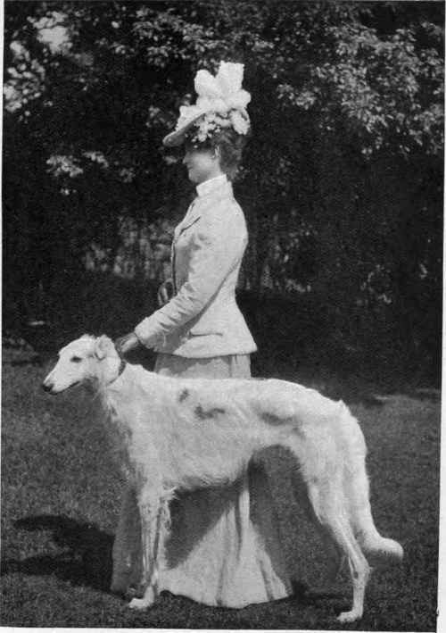 zealouszoi:  Borzoi in 1902