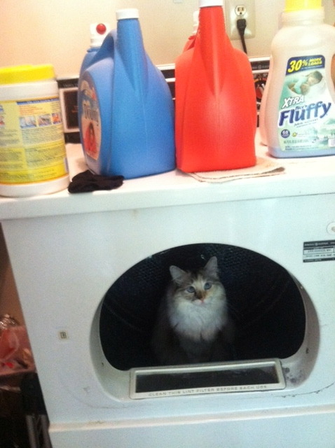 no, cat, i clearly do not need ANOTHER fabric softener.
