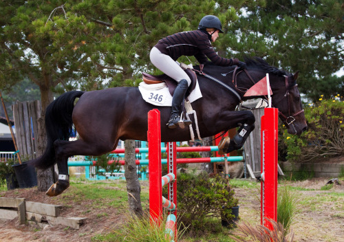 chestnutwithablaze:  Pebble Beach Equine Classic 2011 (by dwinning)
