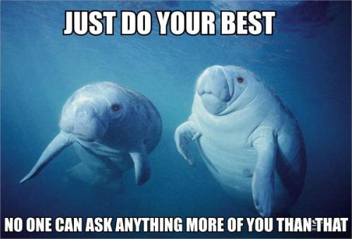 "calmingmanatee:  [Image description: Two manatees are floating in water, looking just to the right of the camera. TOP TEXT: ""Just do your best."" Bottom Text: ""No one can ask anything more of you than that.""]"