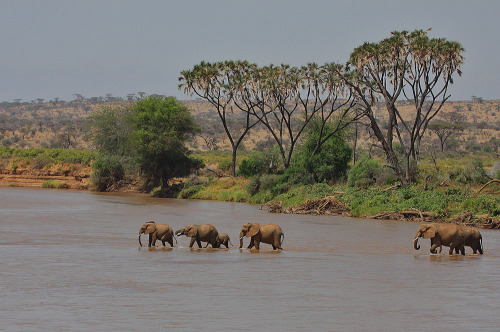 Africa, Crossing the Ewaso Nyiro river. (by Rainbirder (Away for a while))