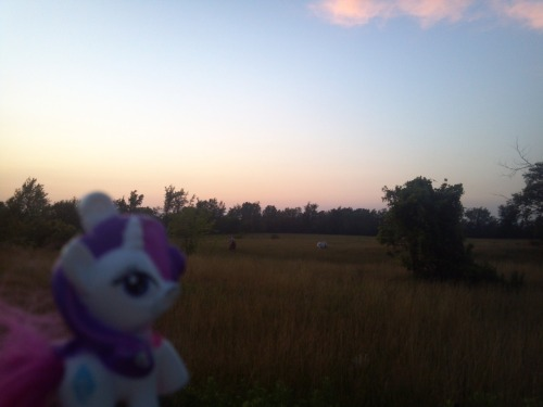In the fields by Arlington. Rarity and some horses.