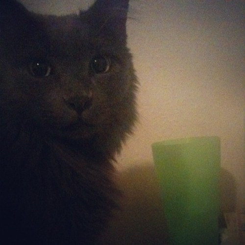 Tut thinks my water tastes better than his. #cat #catstagram (Taken with Instagram)
