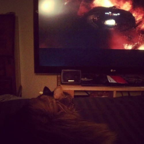 See. Not one Fuck. He sleeps when the Balrog roars. #LOTR #balrog #kindanerdyrightnow #sleepymac (Taken with Instagram)