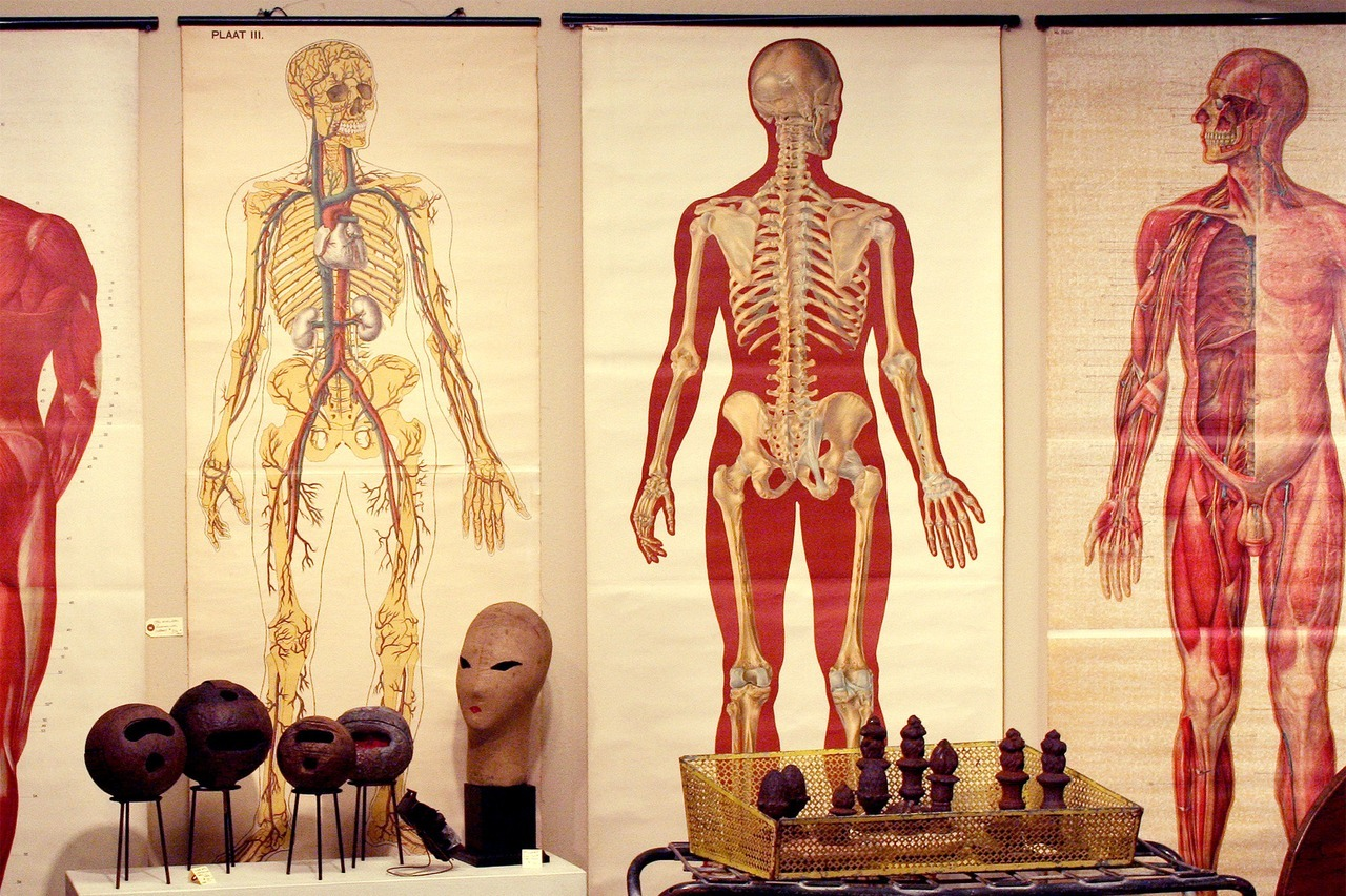 fuckyeahmedicaldiagrams:  International Antiques Fair by Nicole Balch