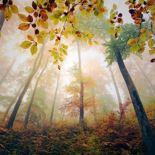 未設定 - Autumn Colours  via Angela Clark-Grundy