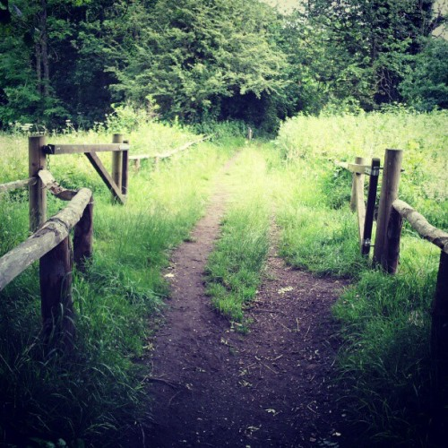 Keston Common… Who knew?  (Taken with Instagram)