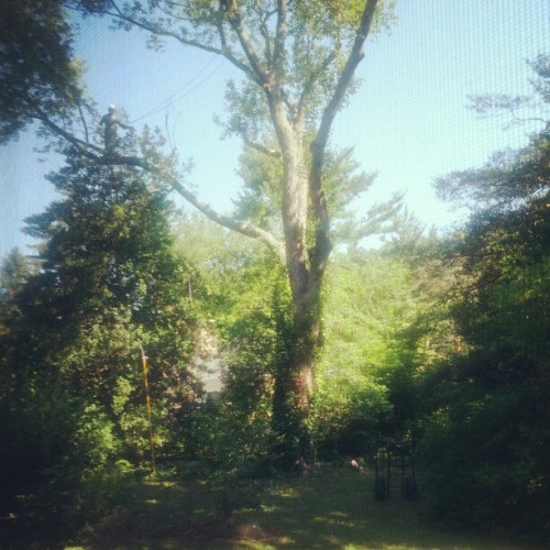 Morning walk #treeclimbing  (Taken with Instagram)