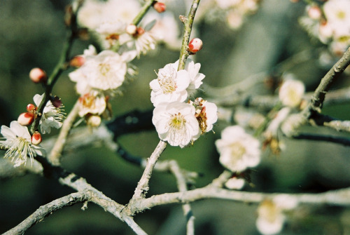 novemberschopin:  Flowers are boring (by ジャスティン)