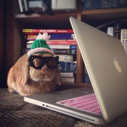 dailybunny:  Hipster Bunny's Got the Look Down Thanks, bunnymama!