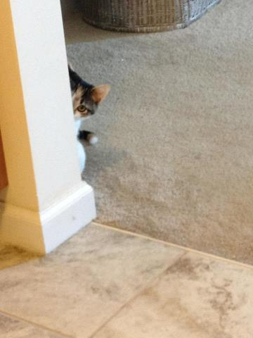 stop creeping cat!