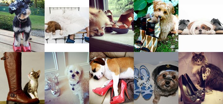 How adorable are these Perfect Pairs? Vote for your favorite now!