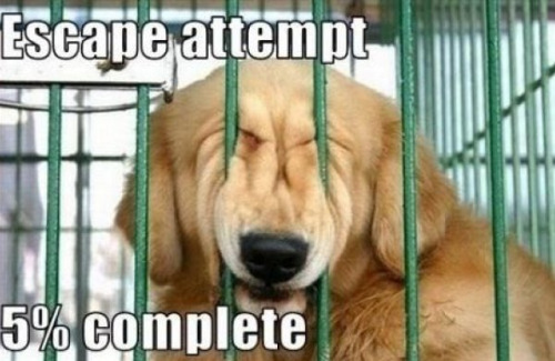collegehumor:  Escape Attempt 5% Complete He might be able to do it.
