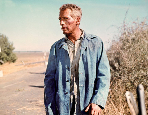 valscrapbook:  Paul Newman in Cool Hand Luke (1967) by cinema_lasuperlativ2 on Flickr.