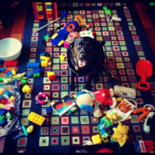 Colby thinks someone has been #busy in the playroom. #photoadayjuly  (Taken with Instagram)