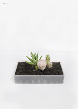 white design garden plants minimal Terrarium