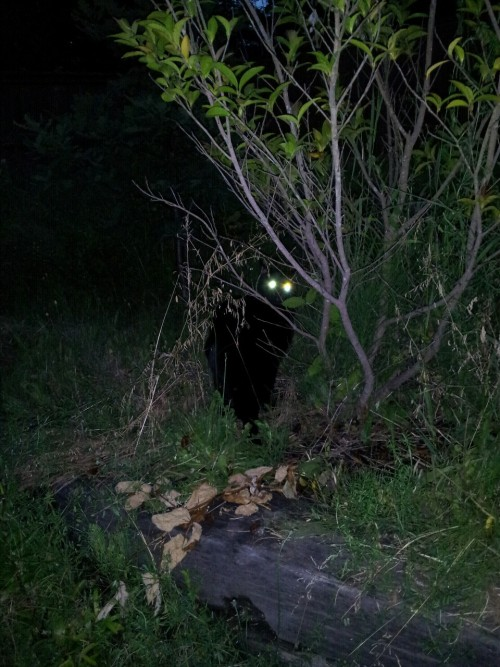 Who is that googly eyed monster in my backyard??  Oh just my black cat Ritter.