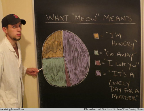 "ilovecharts:  What ""Meow"" Means"