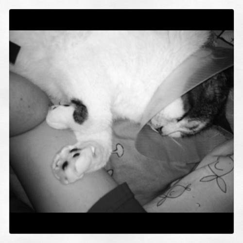 lisa-lion-heart:  Even in his sleep he likes to get close to me xP #thatslove (Taken with Instagram)