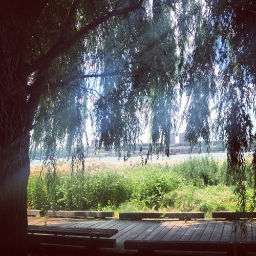Through the #willow. Walking along the #Hudson. #NYC #HudsonRiver #willowtree #scenery #flowers #sun #zen  (Taken with Instagram at Hudson River Park)